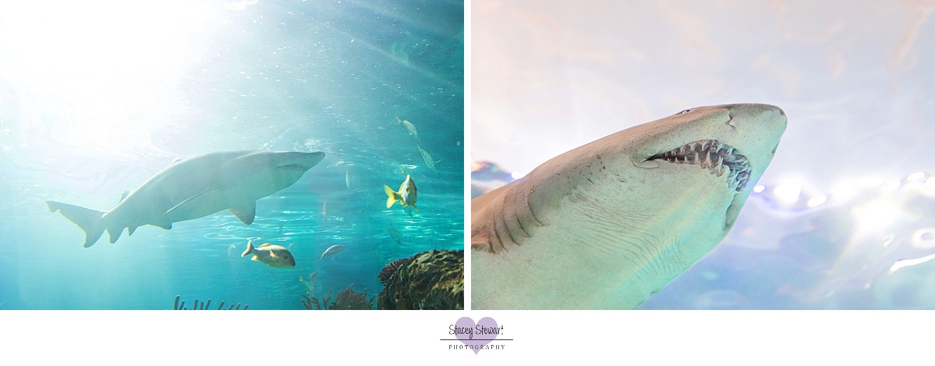 Sharks by Stacey Stewart Photography.jpg